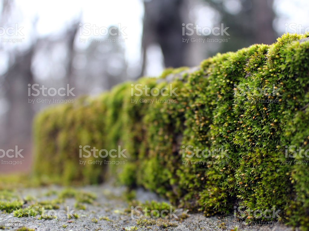 Close-up view of a stone with green moss, 2015 stock photo
