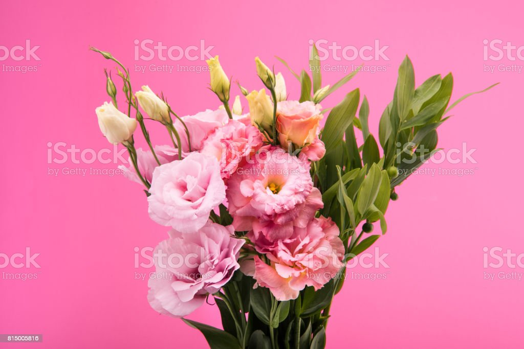 Close-up view of beautiful blooming flowers and buds with green leaves isolated on pink stock photo