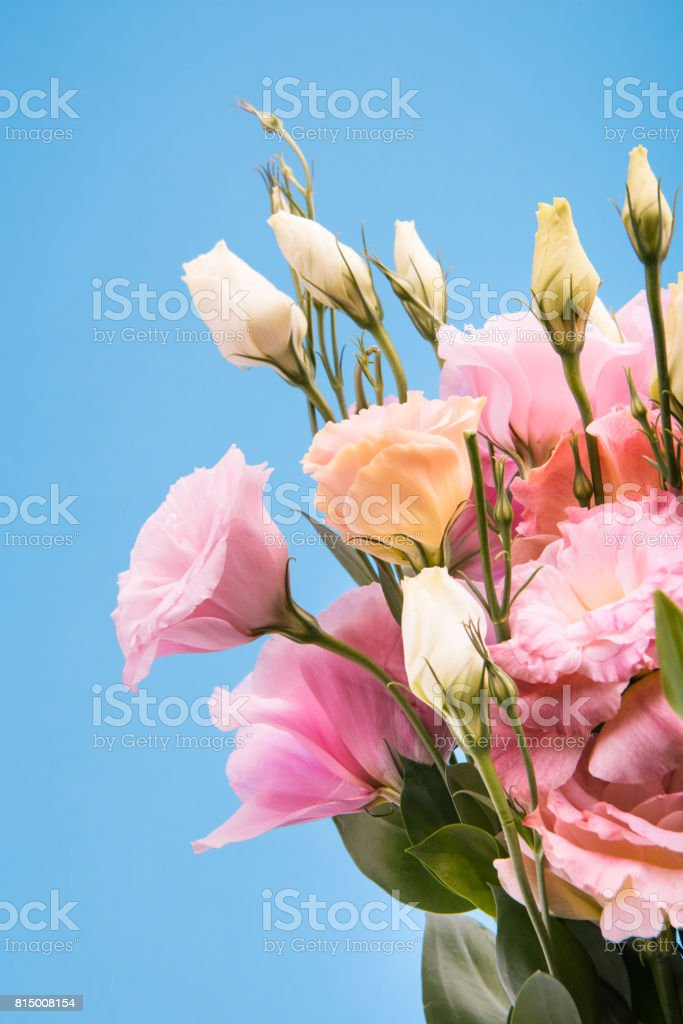 Close-up view of beautiful blooming flowers and buds with green leaves isolated on blue stock photo