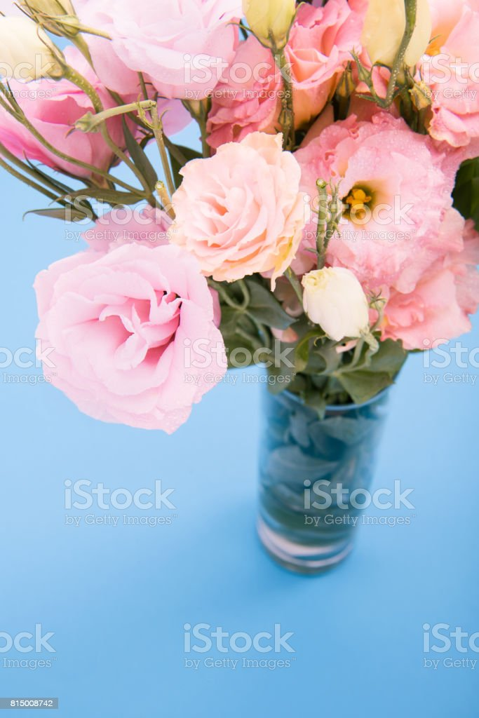 Close-up view of beautiful blooming pink flowers in vase isolated on blue stock photo