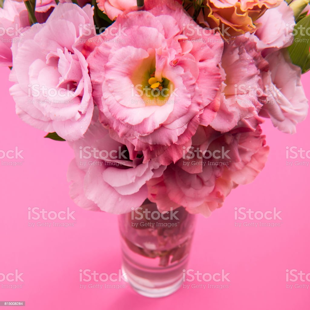 Close-up view of beautiful tender pink eustoma flowers bouquet in vase isolated on pink stock photo