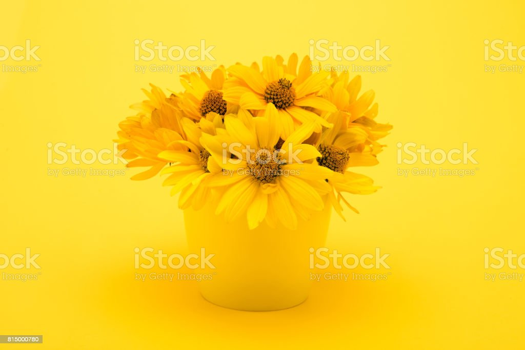 Close-up view of beautiful yellow chrysanthemum flowers in vase isolated on yellow stock photo