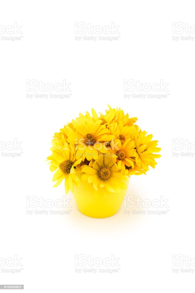 Close-up view of beautiful yellow chrysanthemum flowers in vase isolated on white stock photo