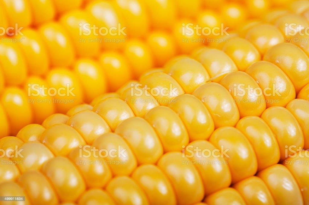 Closeup view of corn grain stock photo