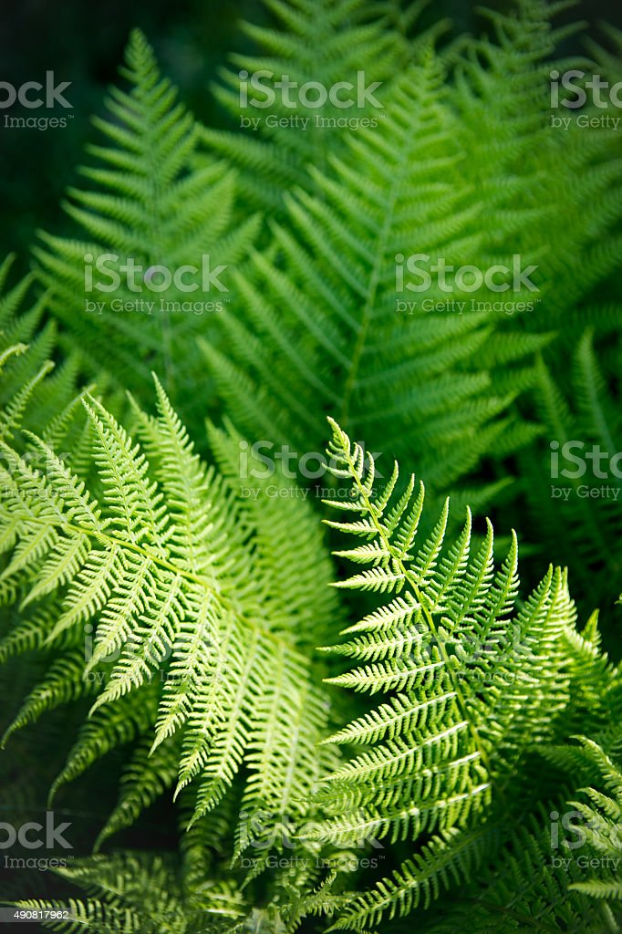 Close-up view of ferns in the forest stock photo