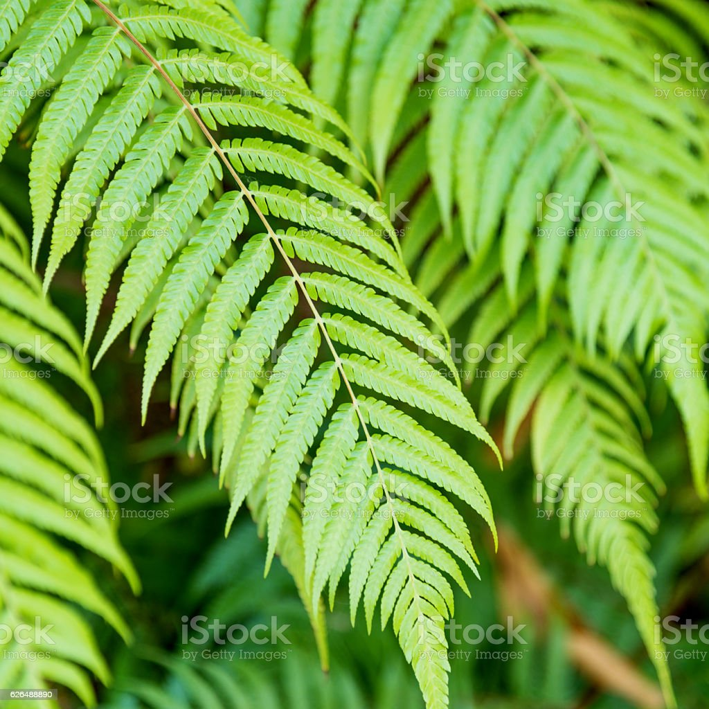 Close-up view of green fern leaves stock photo