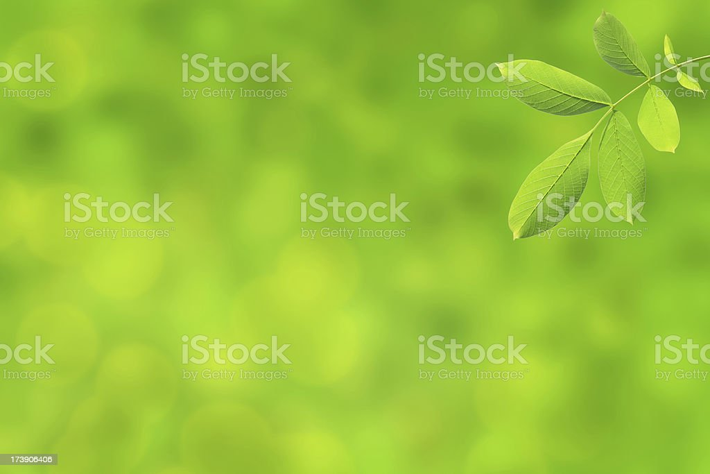 Closeup view of green leaf on green blurred background royalty-free stock photo