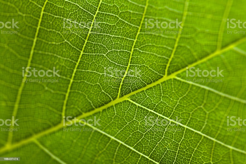 Closeup view of leaf surface with high resolution details stock photo
