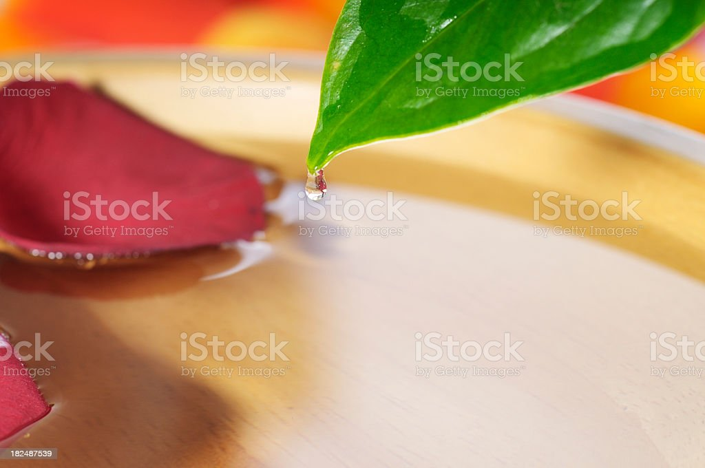 Close-up view of oil dripping from a leaf royalty-free stock photo