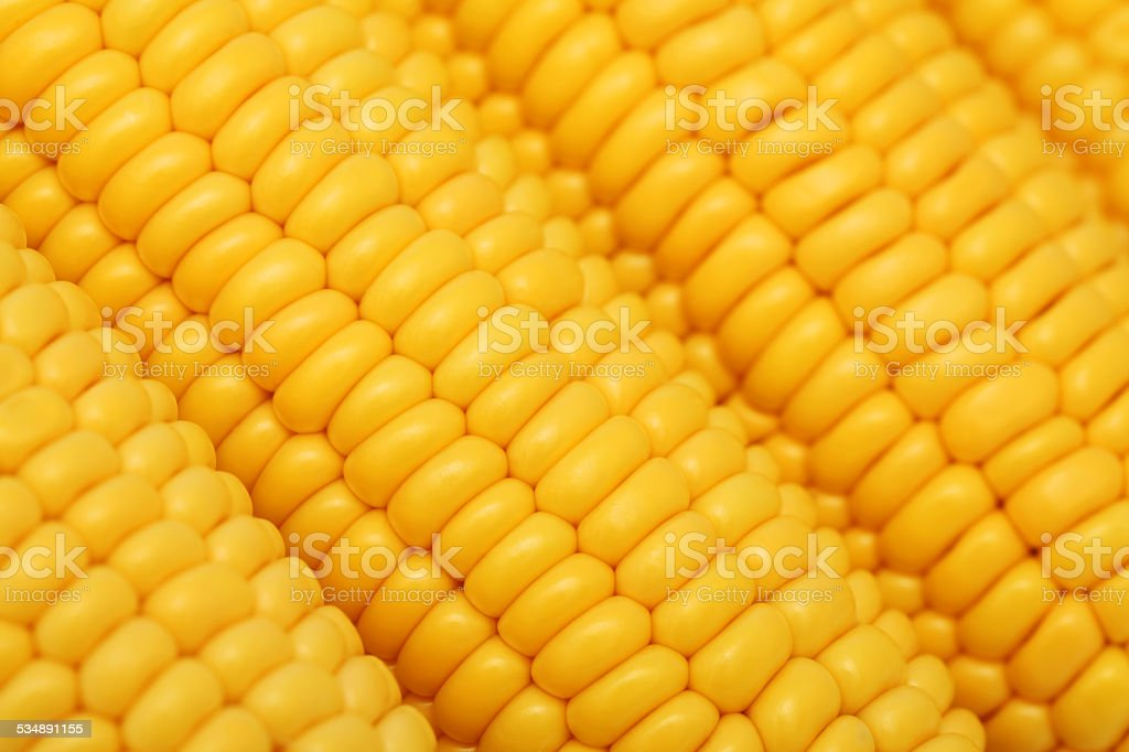 Close-up view of ripe corn on the cob stock photo
