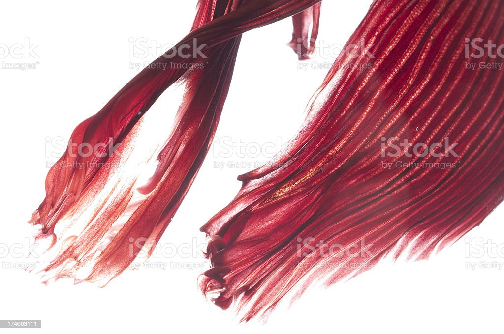 Close-up view of tropical fish's flowing fins royalty-free stock photo
