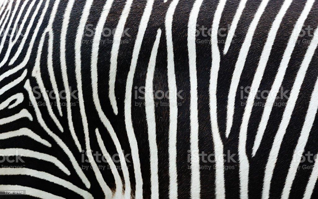 Zebra Print Vector Background - Download Free Vector Art, Stock ...