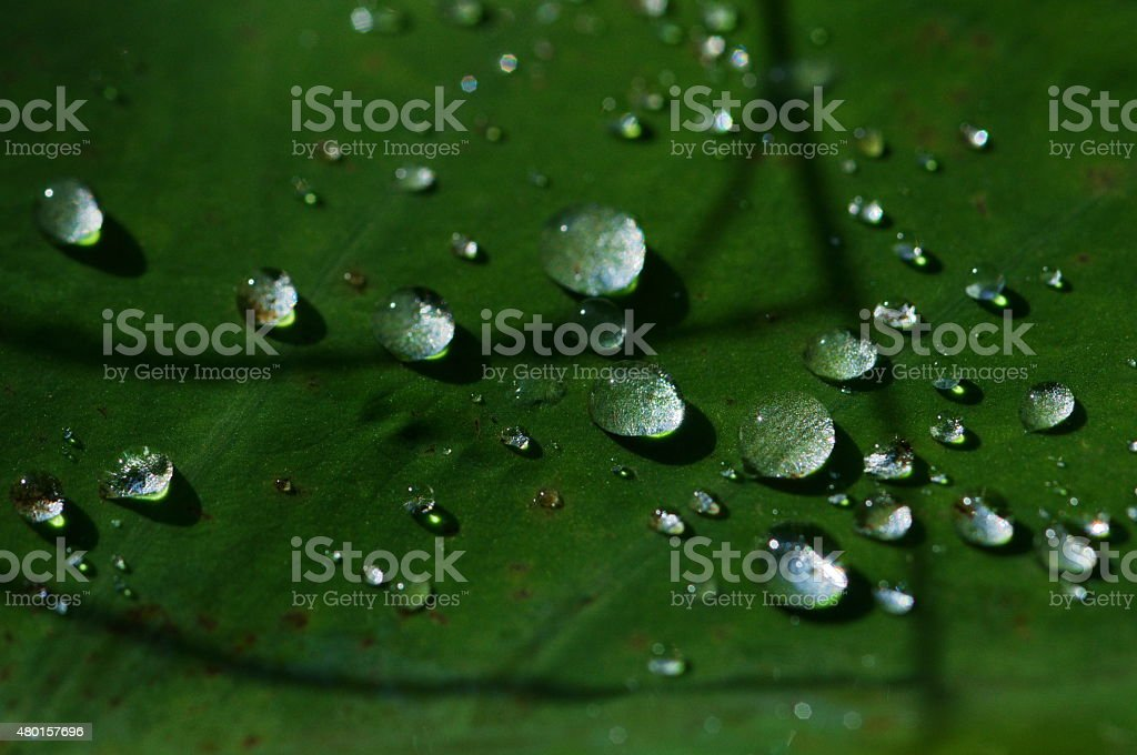 closeup waterdrop on green leaf background stock photo