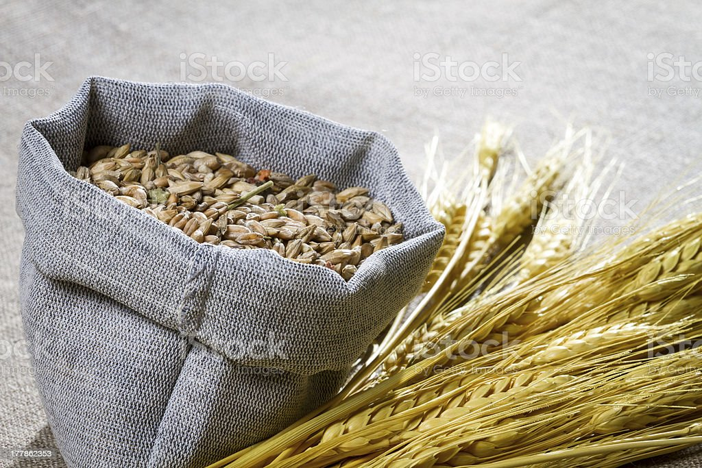 Closeup wheat seed in canvas bag royalty-free stock photo