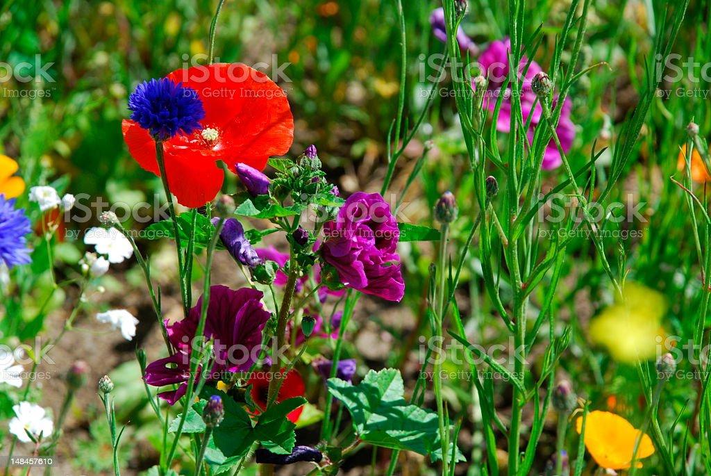 Close-up Wildflowers Background stock photo