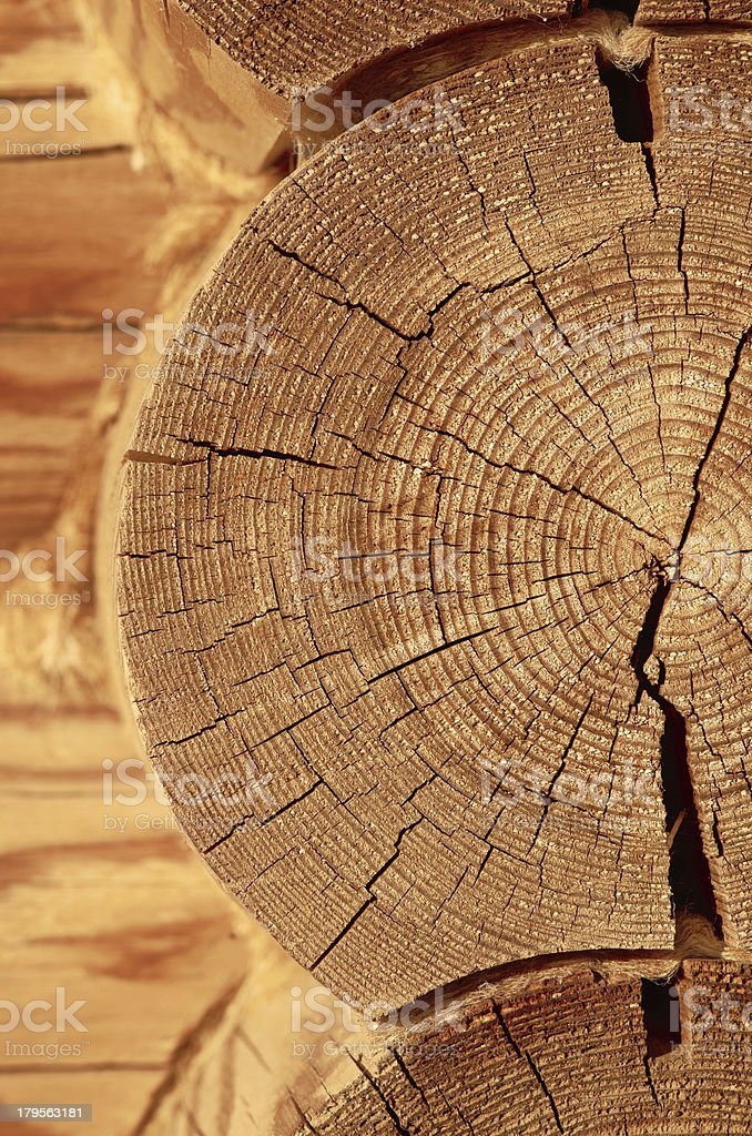 close-up wooden cut royalty-free stock photo