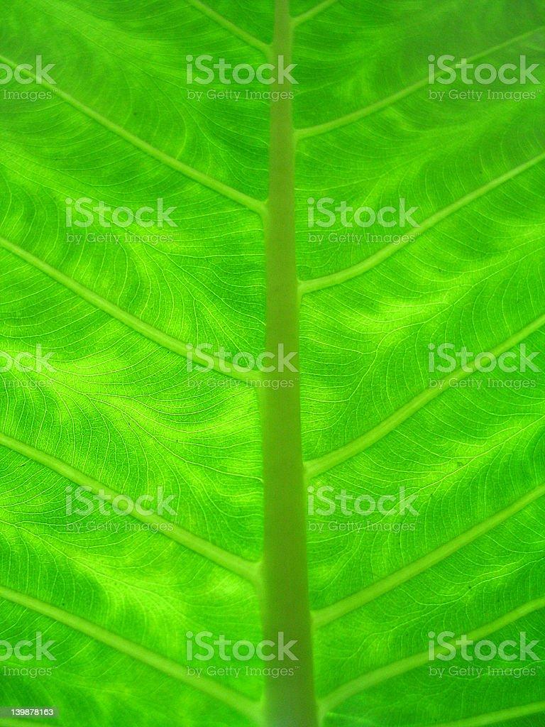 closeup-leaf stock photo