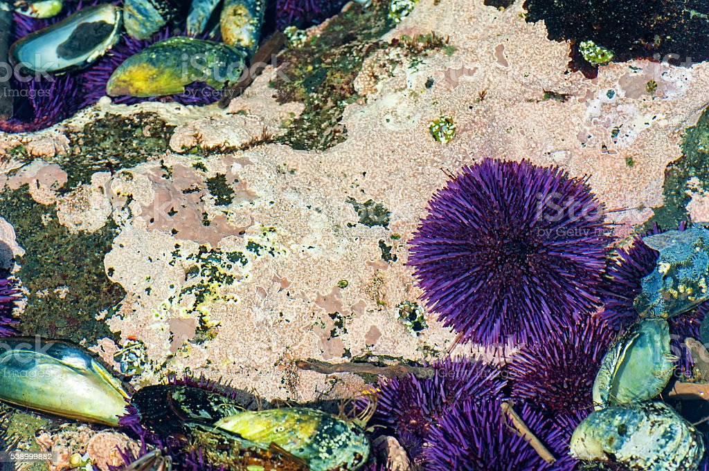 Closup of tidepool on Oregon Coast stock photo