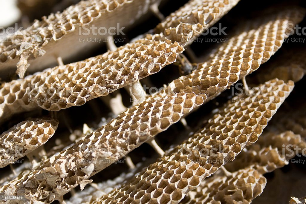 clos-up of wasp nest structure royalty-free stock photo