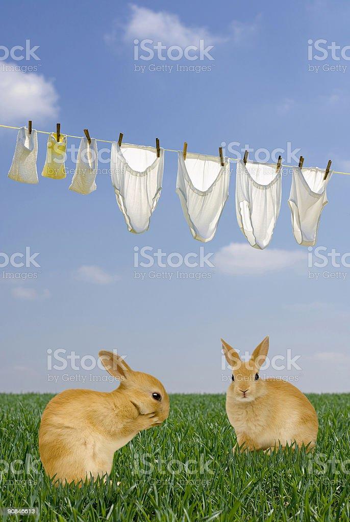 Clothesline and rabbits royalty-free stock photo