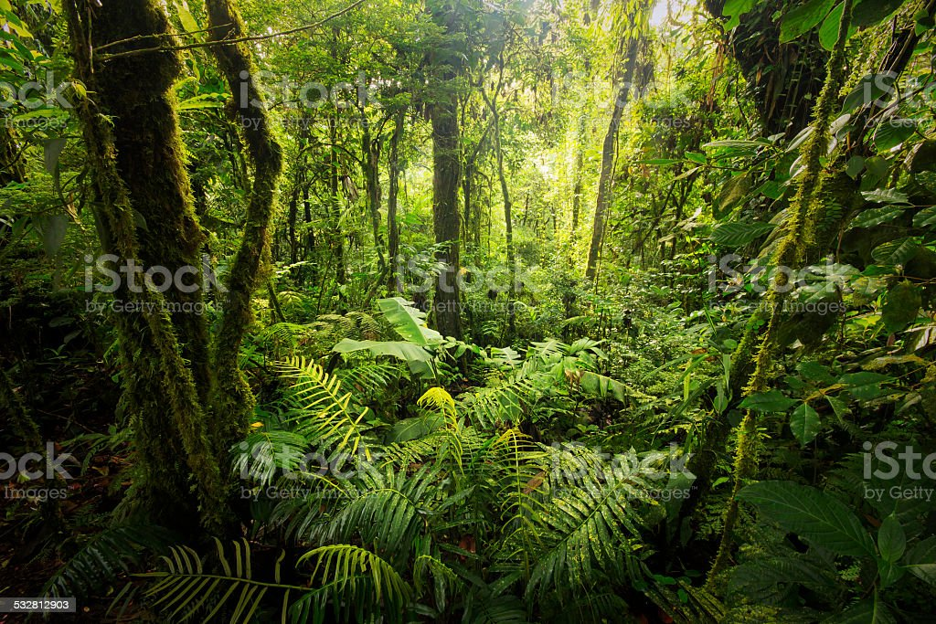 Cloud forest from Costa Rica stock photo