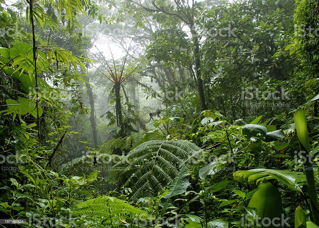 Cloud forest in Costa Rica royalty-free stock photo