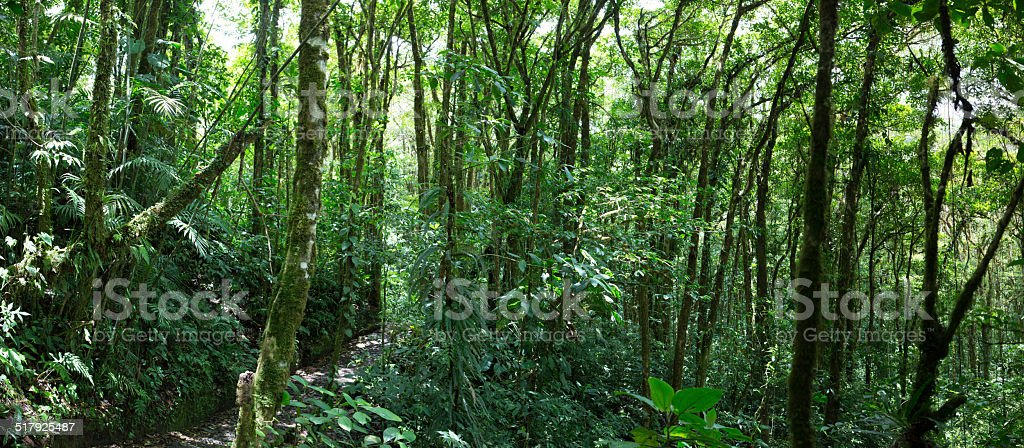 Cloud forest in Costa Rica stock photo