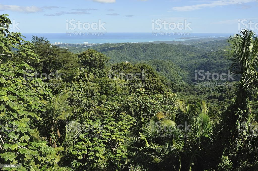 Cloud forest in Puerto Rico stock photo