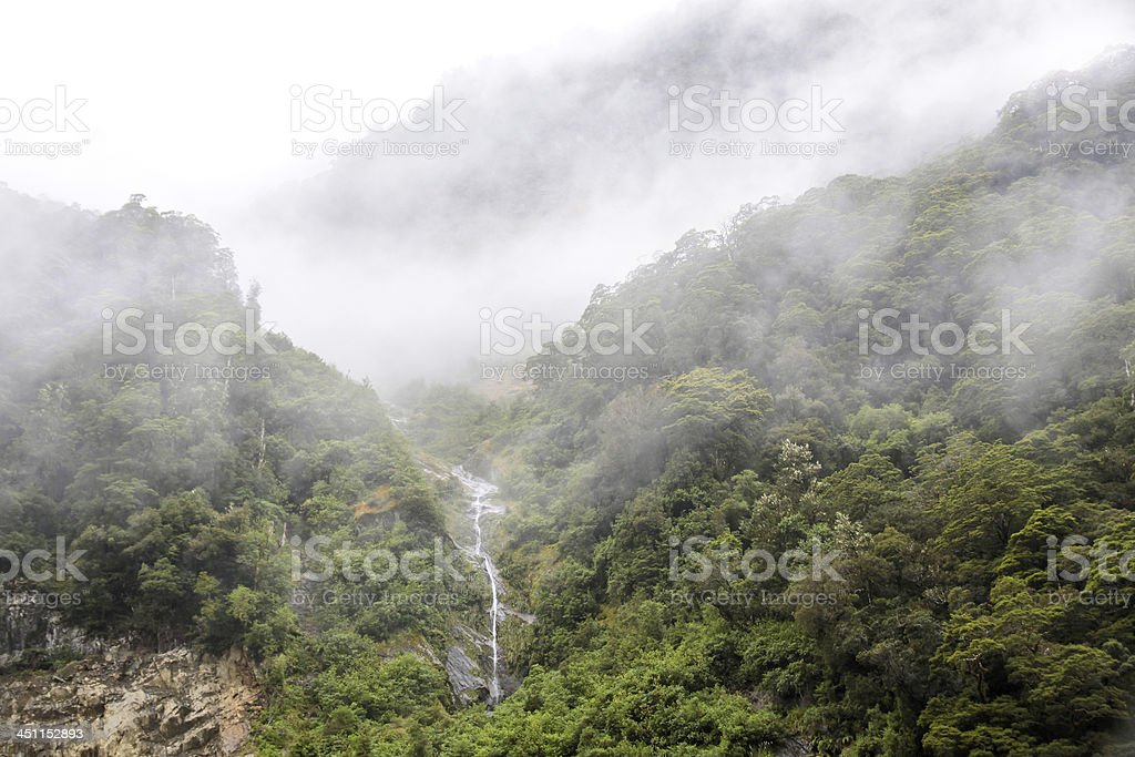 Cloud forest stock photo