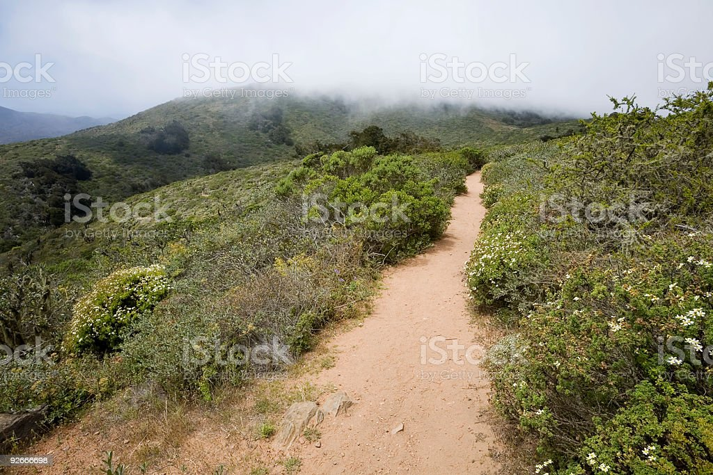 Cloud Forest Trail stock photo