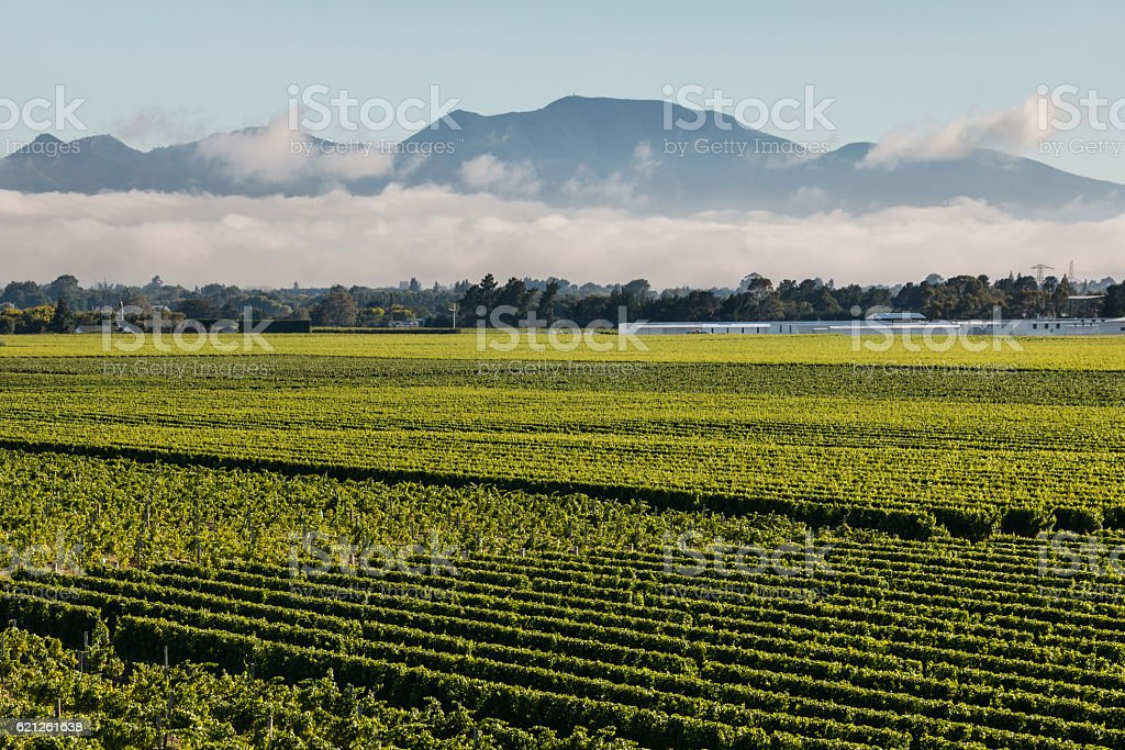cloud inversion above vineyards in Marlborough stock photo