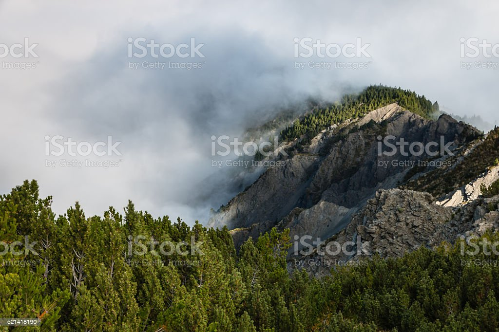 cloud inversion over pine forest stock photo
