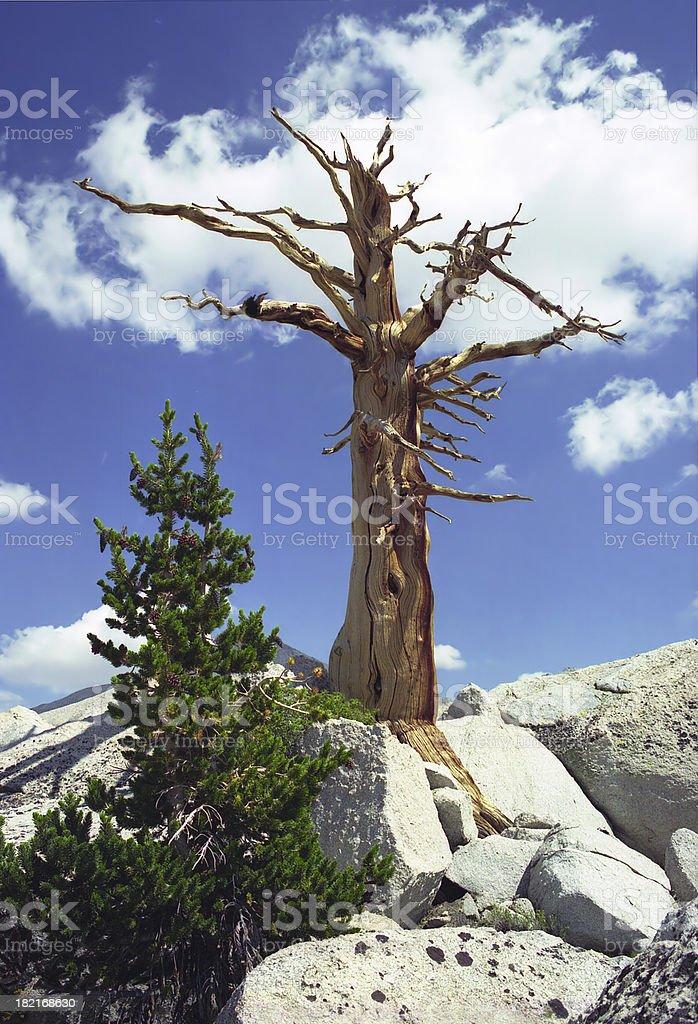 Cloud Tree royalty-free stock photo