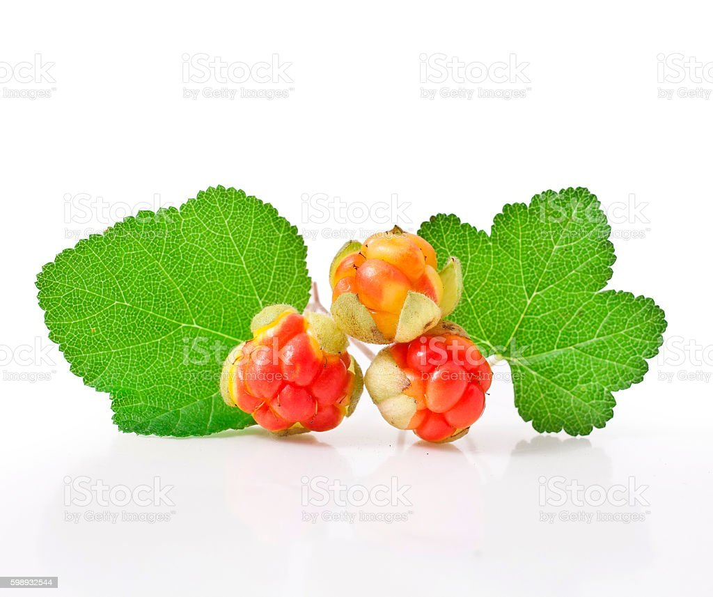Cloudberry with leaves stock photo