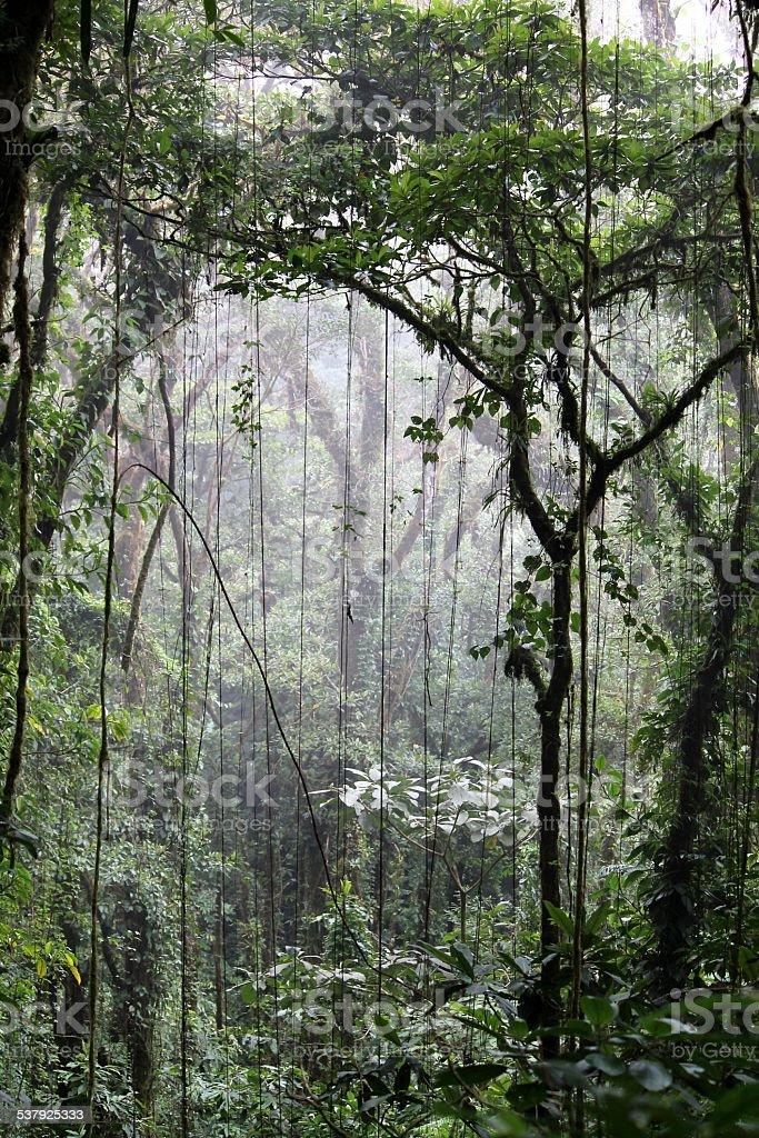 Cloudforest Monteverde stock photo