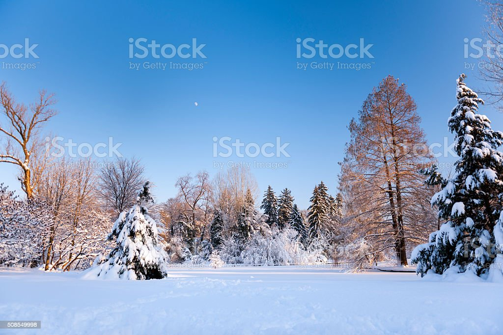 Cloudless And Cold Winter Day In The Park stock photo