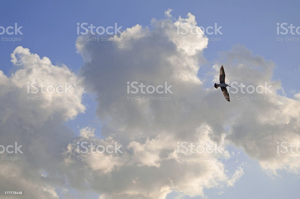 Clouds and Bird royalty-free stock photo