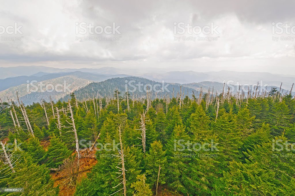 Clouds and Pines on a Mountain Ridge stock photo