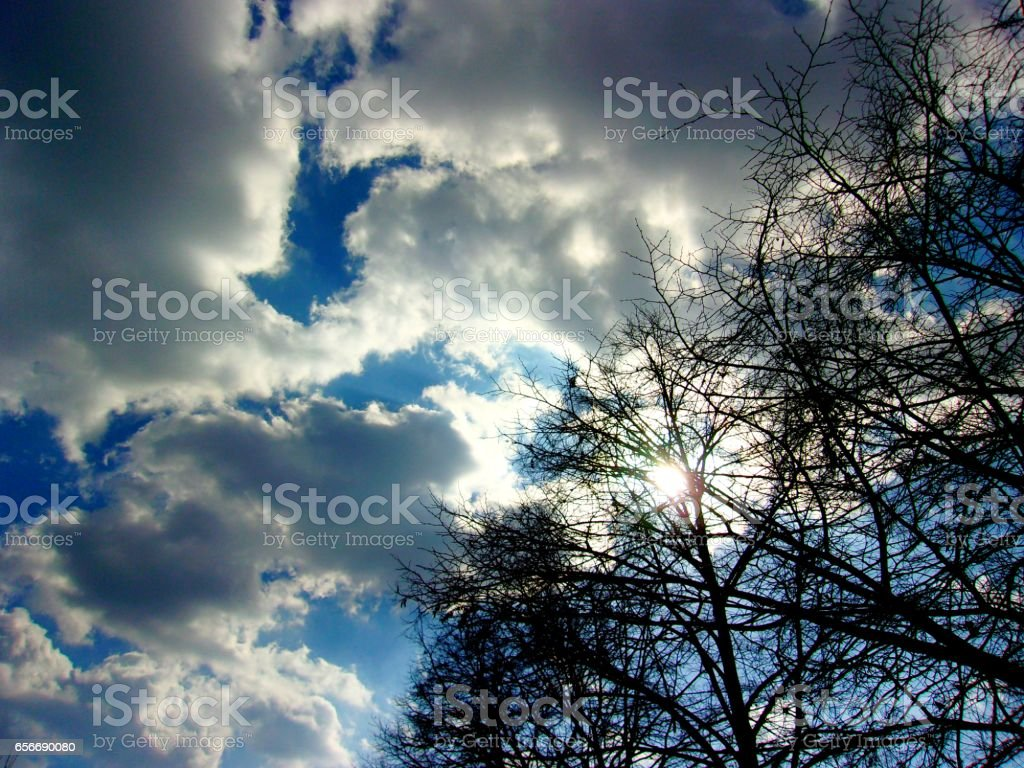 881- Clouds and trees covering the sun stock photo