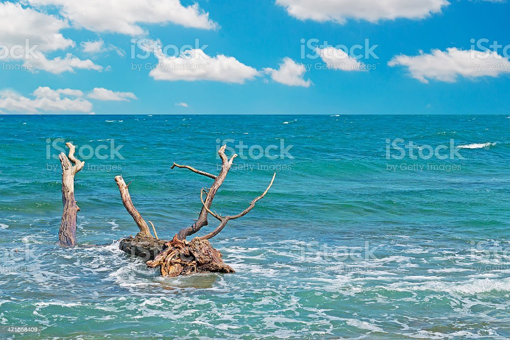 clouds and trunk in Is Arutas royalty-free stock photo