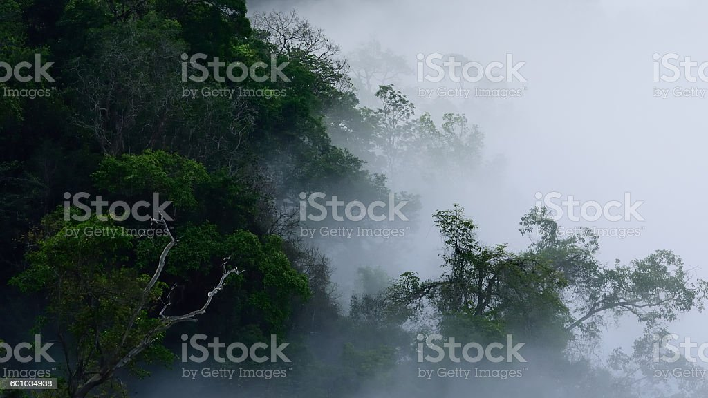 clouds forest landscape stock photo