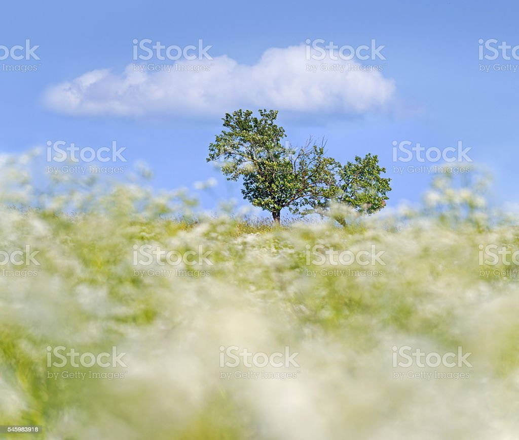 Clouds on ground and sky-white flowers blurred in motion. stock photo
