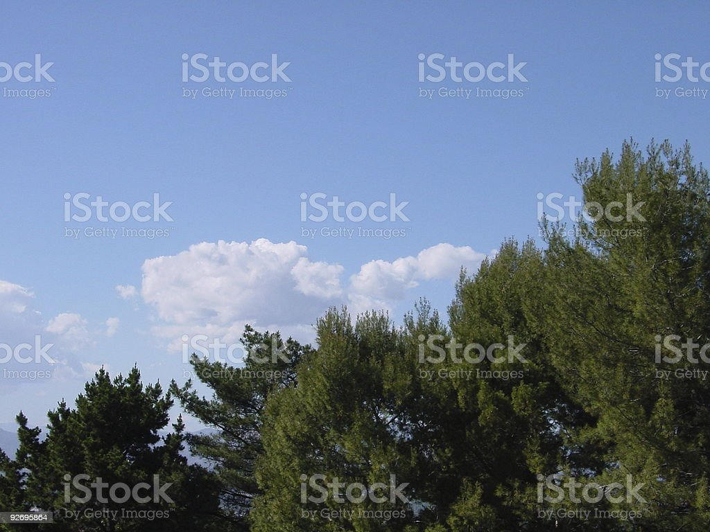 Clouds over treetops royalty-free stock photo