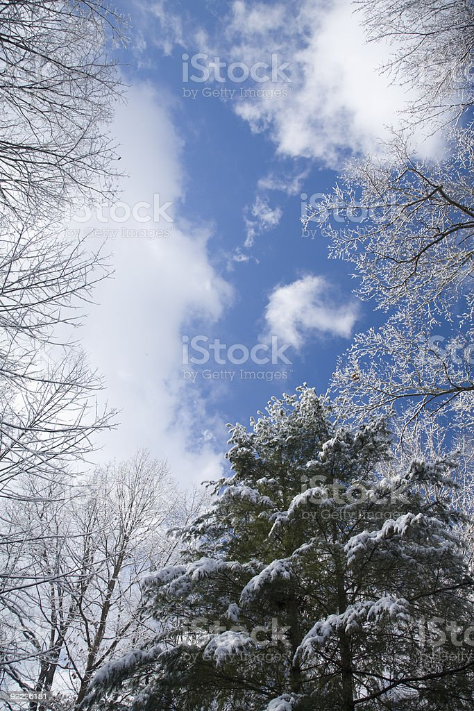 Clouds, Treetops, Frost, Blue Sky stock photo