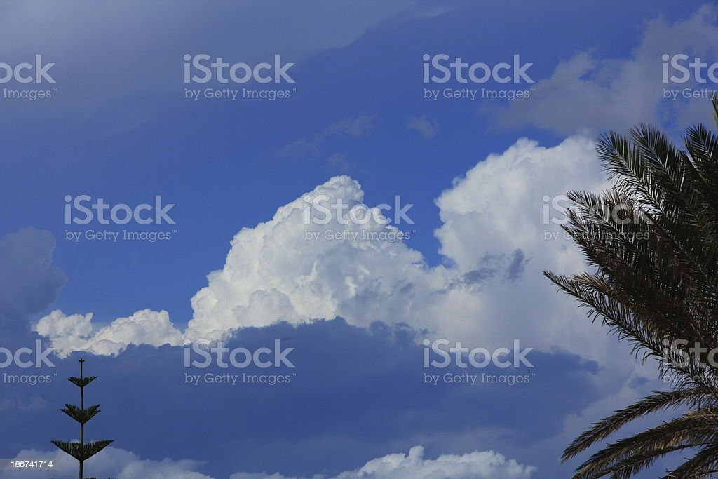Cloudsape and pine trees royalty-free stock photo