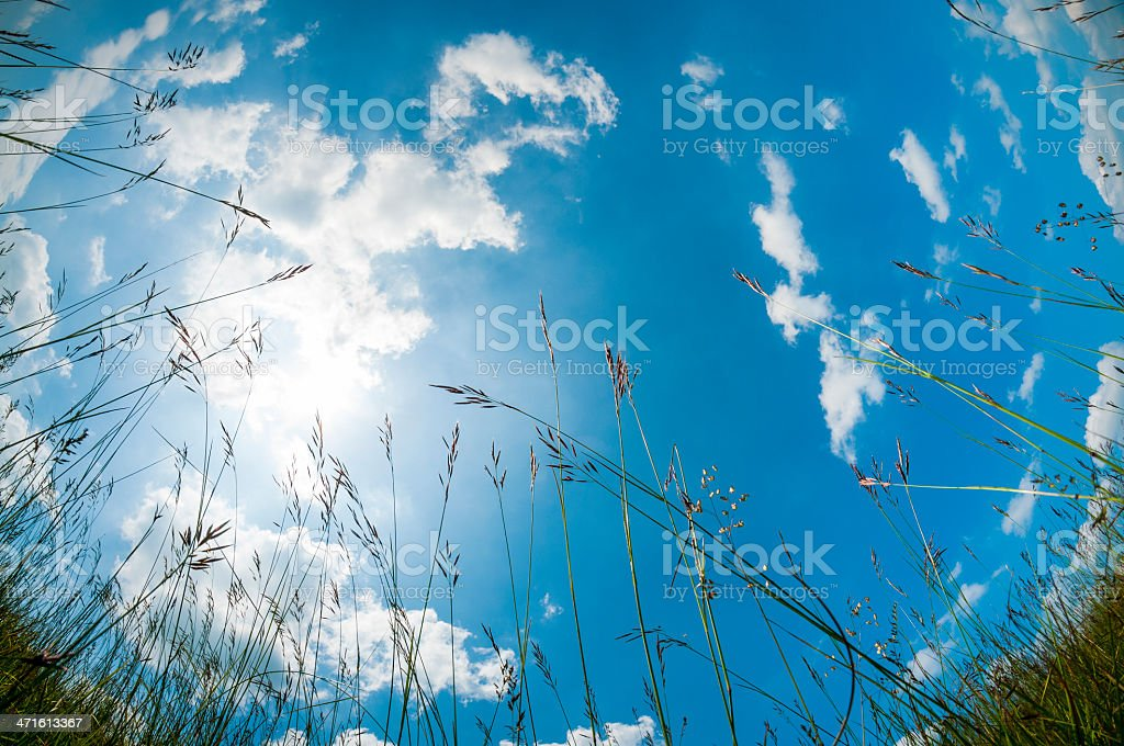 Cloudscape From A Grassy Meadow royalty-free stock photo