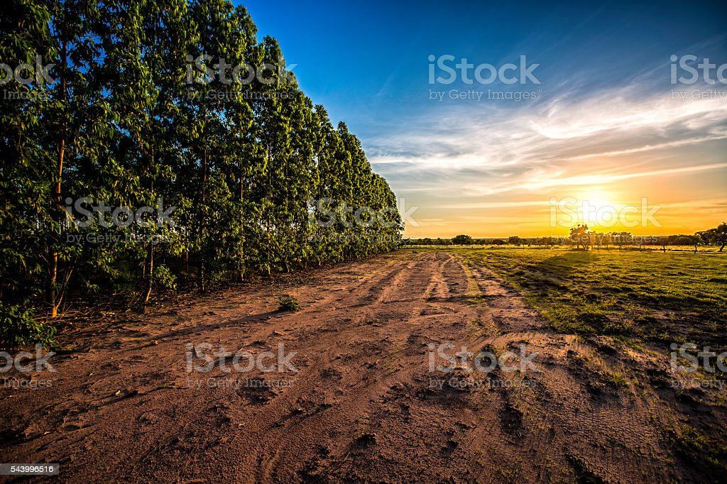 Cloudscate at sunset in open country meadow Apure plains Venezuela stock photo