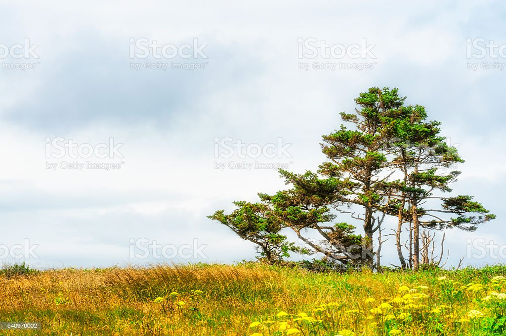 Clouds,trees, tall grasses and wild mustard stock photo