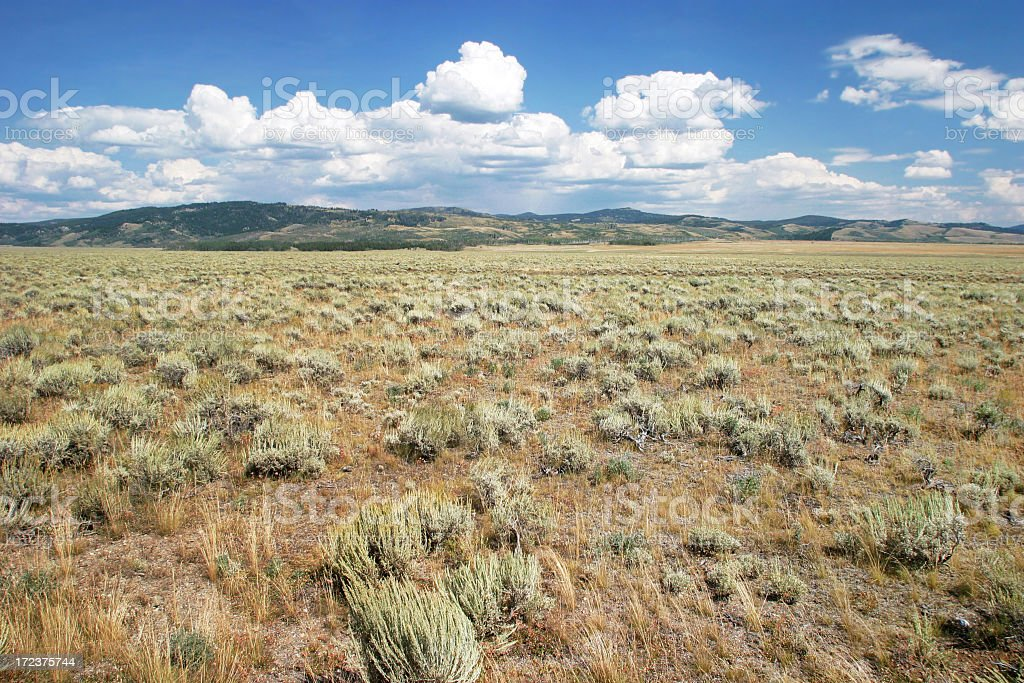 Cloudy blue skies over an expansive meadow stock photo