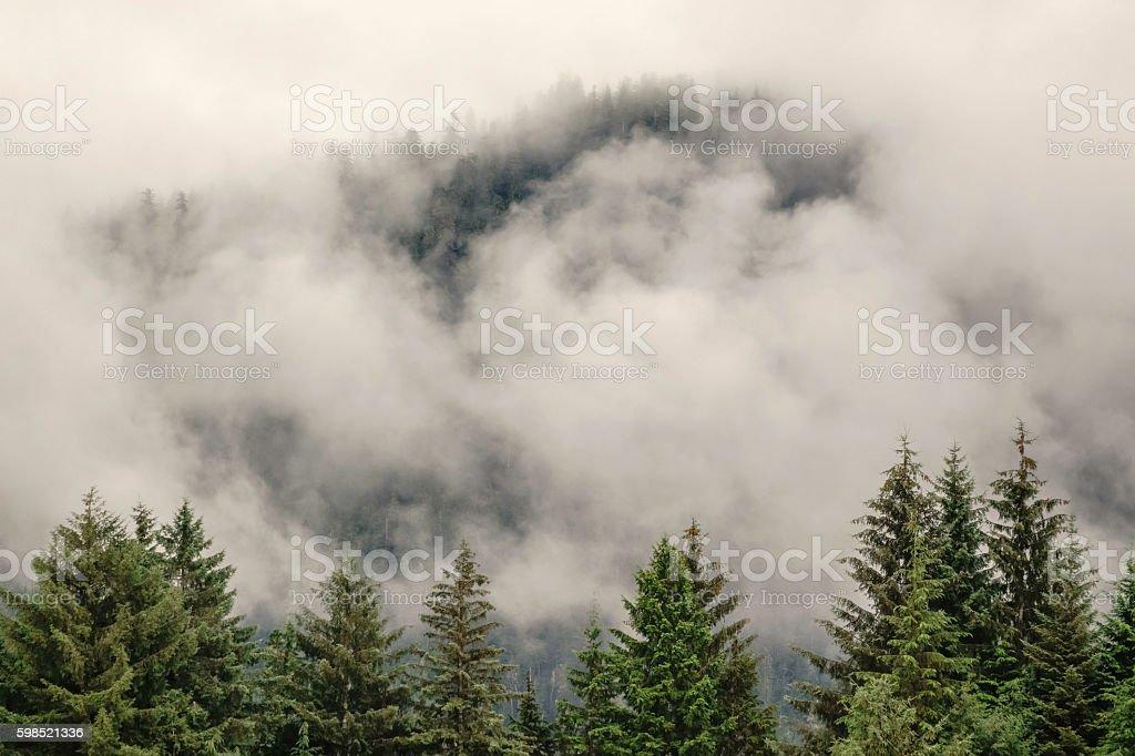 Cloudy rain forest in Alaska stock photo
